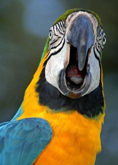 Understanding Why Your Bird Is Biting - Bird Pet Care Corner - PetSolutions