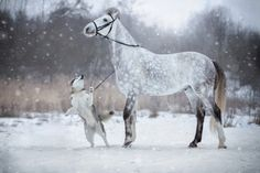 Friendship Between a Horse And Malamute Caught In Mesmerizing Photos - Horses And Dogs, Cute Horses, Pretty Horses, Horse Love, Wild Horses, Dogs And Puppies, Cute Baby Animals, Animals And Pets, Funny Animals