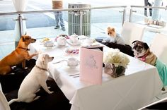 Dog Stars Celebrate Release of Beverly Hills Chihuahua 3 | DogTipper.com