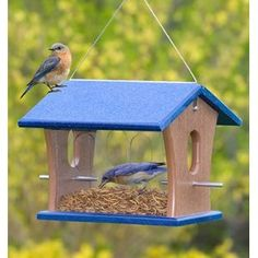 Birdfeeders with Mealworms attract Bluebirds