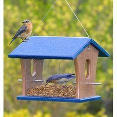 Birdfeeders with Mealworms attract Bluebirds