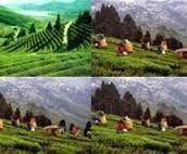 free tourist guide: পশ্চিম সিকিমের হি গাও ভ্রমণ