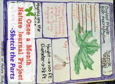 Once a Month Nature Journal Project Sketch the Parts Charlotte Mason, Nature Study, Nature Journal, Science Classroom, Journal Pages, Biology, Journaling, Homeschool, Sketch