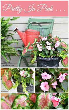 Gorgeous pink planter combination for your summer porch urns.