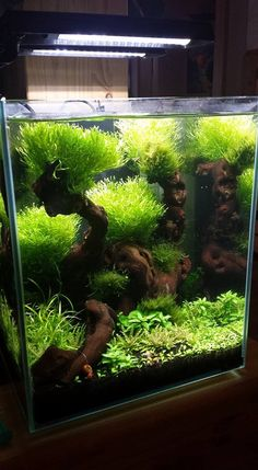 Online Aqurium Shopping: Secrets, Advice And Tips You Need Aquarium Terrarium, Nature Aquarium, Saltwater Aquarium, Aquarium Fish Tank, Planted Aquarium, Freshwater Aquarium, Nano Cube, Fish Tank Design, Indoor Water Garden