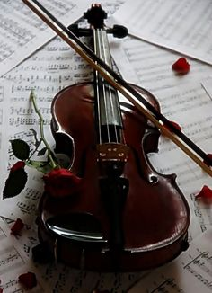 Beautiful, one of my favorite instruments Sound Of Music, Music Is Life, My Music, Local Music, Folk Music, Violin Tumblr, Musica Celestial, Musica Love, Violin Music