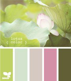 lotus color