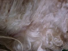 Odelia also sells roving or raw fleece for those who enjoy hand spinning.   Roving comes in 4 or 8 ounce bags.