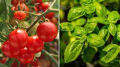 Samplanering Herb Spiral, Growing Vegetables, Sustainable Living, Dahlia, Harvest, Berries, Herbs, Flowers, Plants