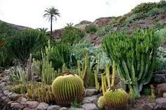 palmitos park gran canaria - Google Search