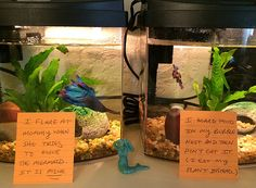 Betta need gallons, a place to hide, temperatures of degrees Fahrenheit, and a filter. This doesn't seem to provide any of those, and the fact that both fish can see each other puts them under constant stress. Betta Aquarium, Betta Tank, Animal Memes, Funny Animals, Cute Animals, Pet Shop, Betta Fish Care, Fishing World, Beta Fish