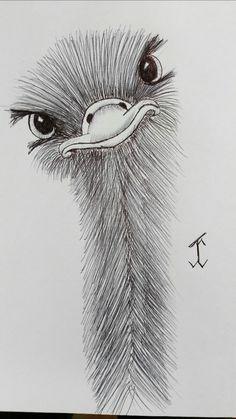 AnimalsOstrich #emu #ostrich #drawing #draw #pen #art