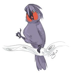Day 11 - Palm Cockatoo