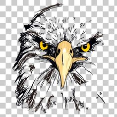 Eagle Hawk Kite Bird PNG Image With Transparent Background - Photo Eagle Sketch, Lion Sketch, Eagle Face, Bald Eagle, Png Images For Editing, Eagle Drawing, Eagle Pictures, Yearbook Covers, Dslr Background Images