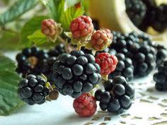 Galaretka z kurczakiem i szynką | KuchniaMniam Fruit, Recipes, Food, Diet, Blackberries, Vinegar, Fruit And Veg, Cherries, Business