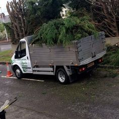 Looking For Tree Surgeon Monifieth  In Monifieth? Call Apollo Tree Services For Monifieth Today