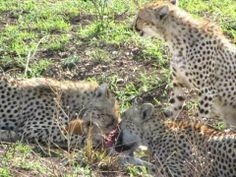 We are only travel operators in Kenya who offers special tour packages with luxury accommodation.