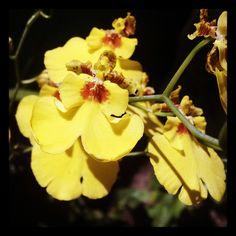 Orquídea - Unidade Laranjeiras  www.miraflores.com.br/home