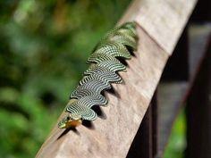 Paradise flying snake http://ift.tt/2fg0Kj7 via /r/aww http://ift.tt/2wTR086 http://ift.tt/2wX8hef