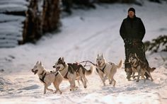 Mark Squires exercises his dogs as sledders and their huskies practice at a forest course ahead of the Aviemore Sled Dog Rally in Feshiebridge, Scotland. The Siberian Husky Club of Great Britain's race will take place this weekend near Aviemore. Pictures Of The Week, Cool Pictures, Frilled Shark, Country Landscaping, Outdoor Outfit, Great Britain, Great Photos, Pet Birds, Animals Beautiful