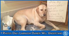 labrador-issues