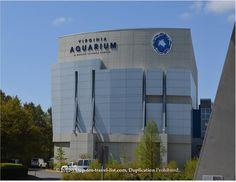 The Virginia Aquarium & Marine Science Aquarium                                                                                                                                                      More