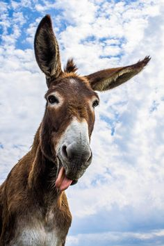 Wild Animals Pictures, Funny Animal Pictures, Funny Donkey Pictures, Cute Baby Animals, Farm Animals, Funny Animals, Regard Animal, Arte Van Gogh, Cute Donkey
