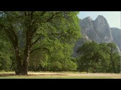 Yosemite Nature Notes - Episode 17 - Black Oaks
