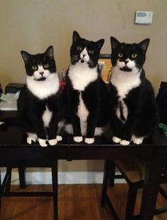 Gatti o tasti del pianoforte?