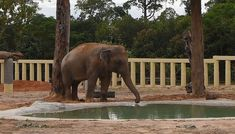 The post Kaavan the elephant explores Cambodian sanctuary appeared first on INCPak. The former 'world's loneliest elephant' Kaavan is lonesome no more. The giant after his safe transfer from Islamabad to the Cambodian Wildlife sanctuary is now enjoying his new home, making contact with other species, after eight years of aching solitude. The news was announced by Pheaktra Neth, the spokesperson for the Extraordinary Chambers in the […] The post Kaavan the elephant explores Cambodian sanctu