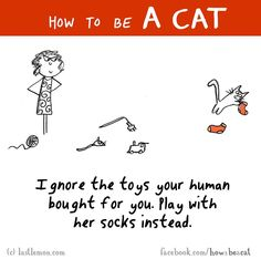 Humans Really Love This!  If she gets you a new toy, play with the wrapping the toy came in.  Ignore the new toy!