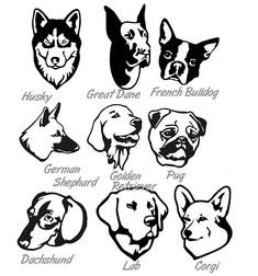 Dog Vinyl decal lab corgi pug mug sticker laptop car Corgi Pug, Pugs, Mickey Mouse Art, Pug Mug, Dog Crafts, Dog Signs, Book Folding, Cat Breeds, Animal Drawings