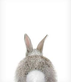 Baby Bunny Bum Print