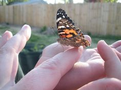"""SO cool! You can order caterpillars that turn into butterflies within 2-3 weeks. A great """"pet"""" for toddlers. Mine is on it's way thanks to a thoughtful friend."""