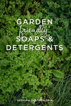 A great write up about which soaps and detergents are good for your garden. Good to know before setting up a gray water system.