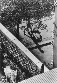 André Kertész. The White Horse 1962 NY