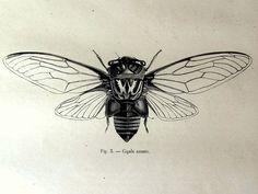 cigale tatouage - Recherche Google