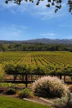 an absolutely stunning view could be yours in Alexander Valley, Sonoma: http://www.estatevineyard.com/featured-properties/