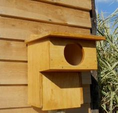 Caja nido para cárabo tratada al aceite de linaza
