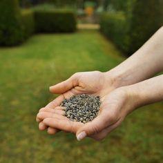 Bud Bank: Saving Seeds for Later