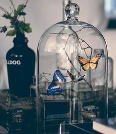 Não precisa ficar com dó das borboletas: elas são de papel. Dê o play e aprenda a fazer este arranjo lindo para decorar a sua casa.