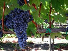 America's best wine country: Napa Valley California reservations ...