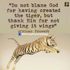 Do not blame god for having created the tiger, but thank him for not giving it wings. - African #wisdom #quotes