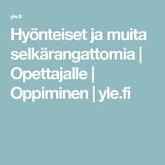 Hyönteiset ja muita selkärangattomia | Opettajalle | Oppiminen | yle.fi