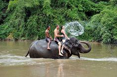 Elephant Village – Bangkok