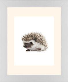 Baby Hedgehog Framed Print, White, Contemporary, White, Cream, Single piece, 8 x 10 inches