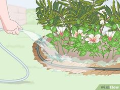 How to Install Plastic Lawn Edging: 12 Steps (with Pictures) - Modern Design Garden Beds, Lawn And Garden, Plastic Lawn Edging, Types Of Plastics, Tree Roots, Lawn Care, Lawn Mower, Garden Furniture, Modern Design
