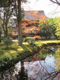 本堂の背後、新霊宝殿の前に広がる庭です Kyoto Japan, World, Plants, Painting, Painting Art, Paintings, The World, Plant, Painted Canvas