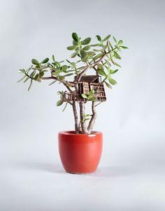 Miniature Treehouse Sculptures / LA-based artist Jedediah Corwyn Voltz constructs miniature treehouses wrapped around common houseplants or bonsai trees. so lovely!