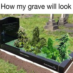 I like smokin' 420 weed cannabis ganja dead grave rip resinpieces Weed Jokes, Weed Humor, Marijuana Art, Medical Marijuana, Cannabis Oil, Marijuana Plants, Ganja, Bob Marley, Herbs